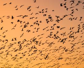 Bird Migratory Photo